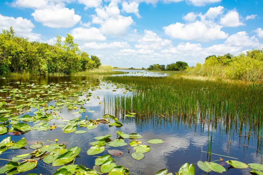 پارک ملی Everglades