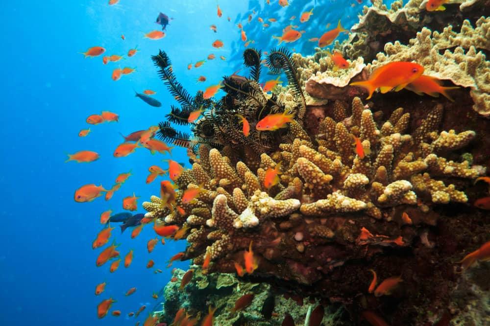 great barrier reef،استرالیا