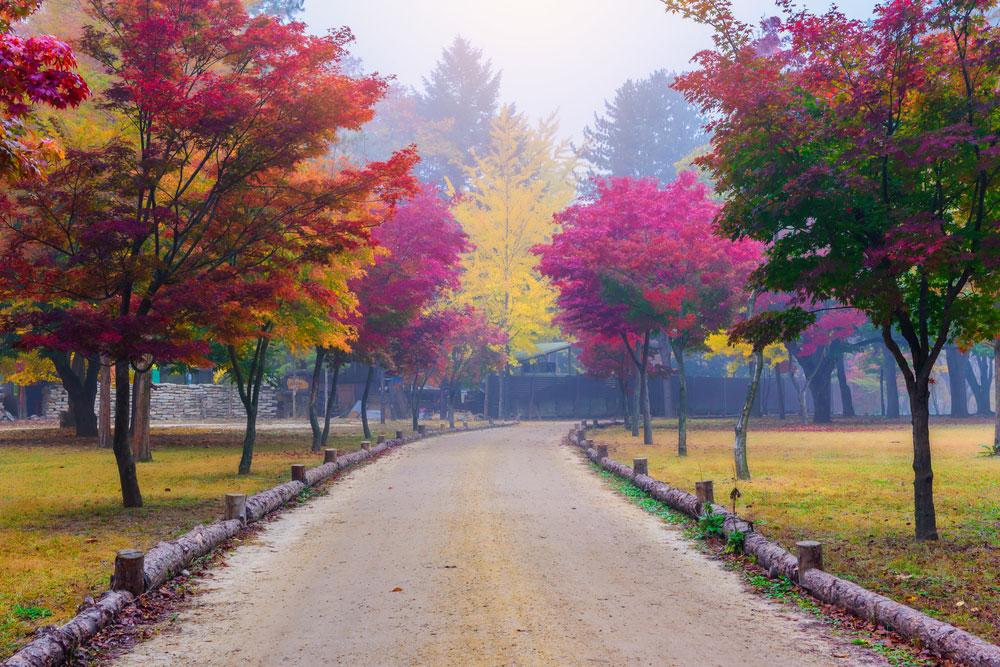 جزیره نامیسیوم،کره جنوبی