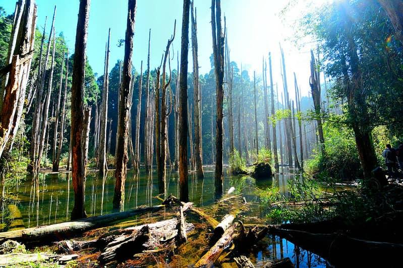 جنگل Nantou Zhushan Wangyou