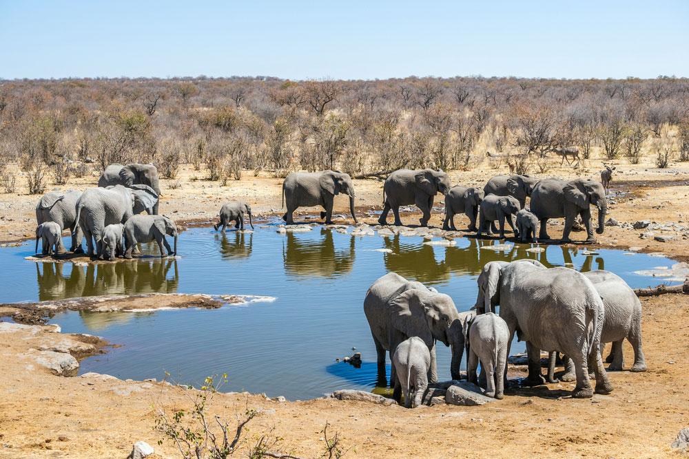 پارک ملی ایتوشا،نامبیا