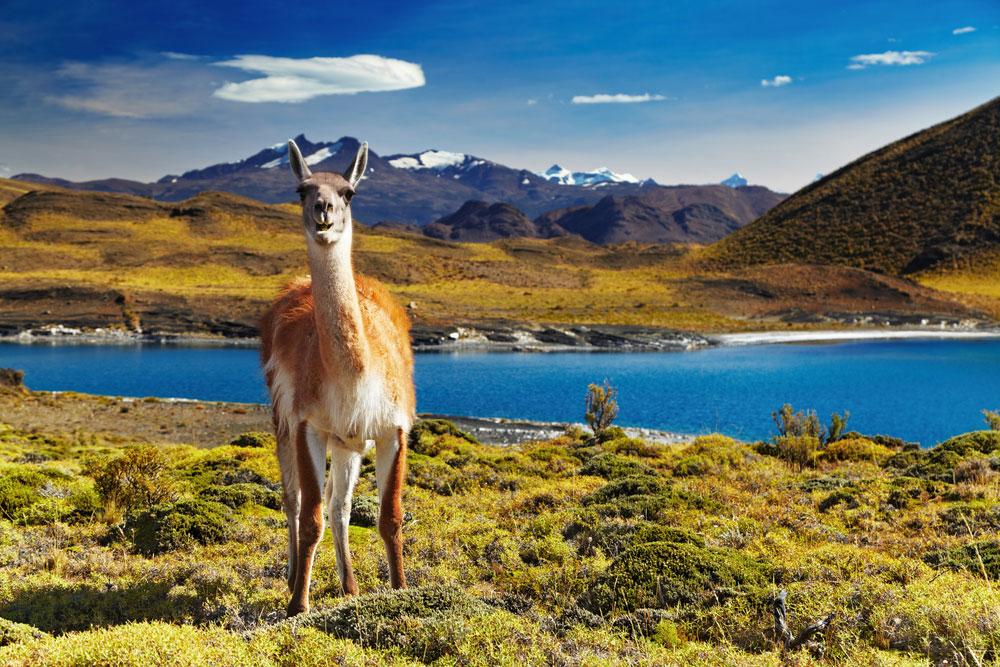 پارک ملی تورس دل پین ،شیلی